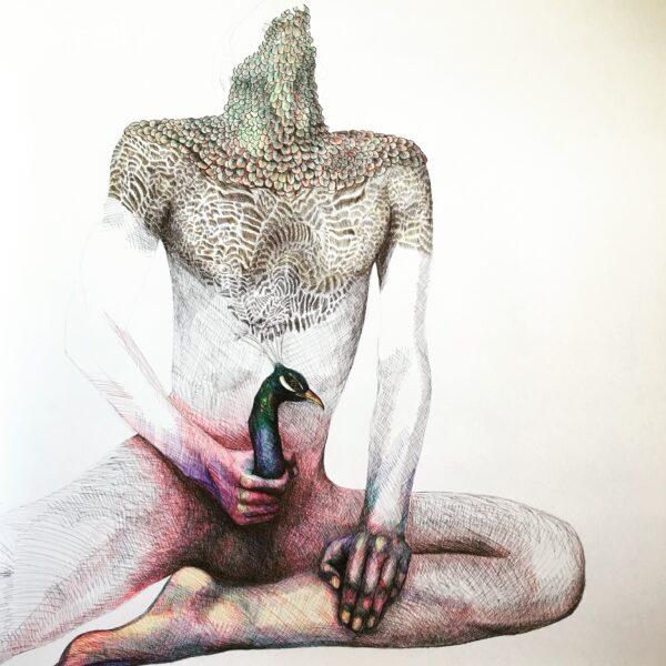 Peacock cock